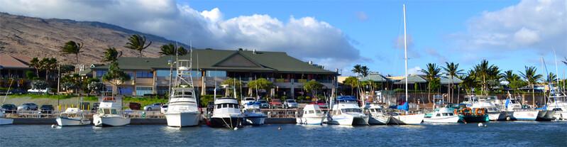 Maui Banyan Studio photo