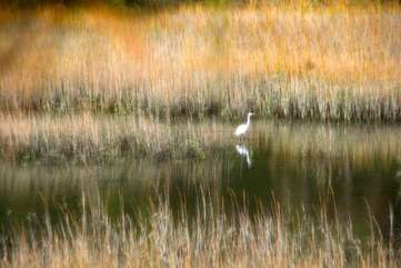 Enjoy watching the abundant wildlife in the ever-changing marsh.