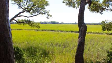 From every vantage point, you will see marsh, water, and wildlife.