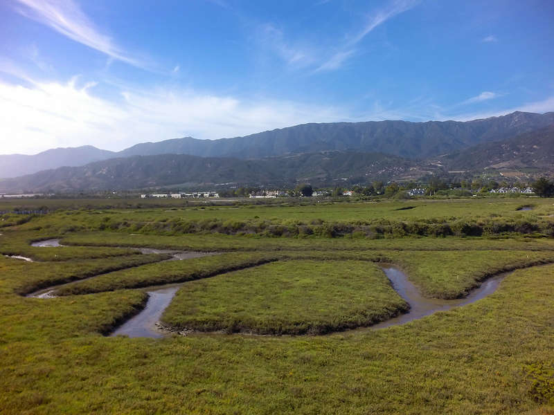 A bird watching paradise on Carpinteria Salt Marsh