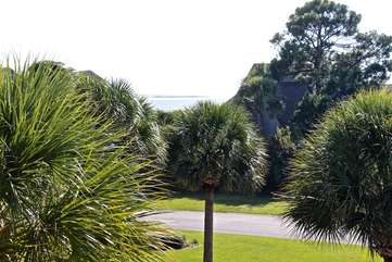 Take in the view of the water through the palm trees.