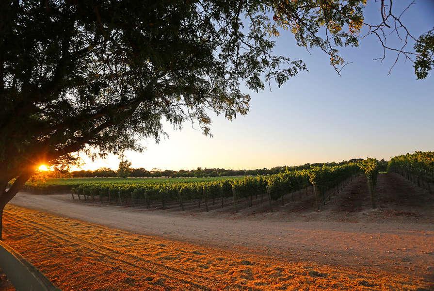 Tour beautiful Santa Barbara Wine Country