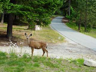 Enjoy local wildlife from the comfort of this home and throughout the area