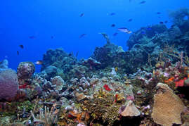 Roatan sits on the second largest reef in the world