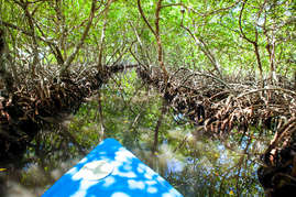 Spend the day exploring the mangroves on the east side of the island