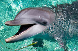 Contact our concierge about spending the day with the dolphins at Anthony's Key Resort