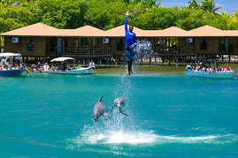 Ask our concierge about the Dolphins at AKR