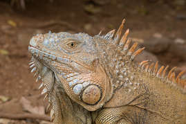Iguana Park in French Key is a must