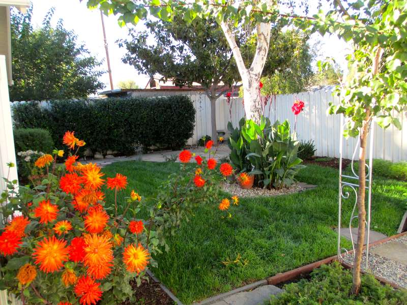 Backyard is dotted with vibrant flowers