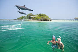 While in Roatan see the Dolphins