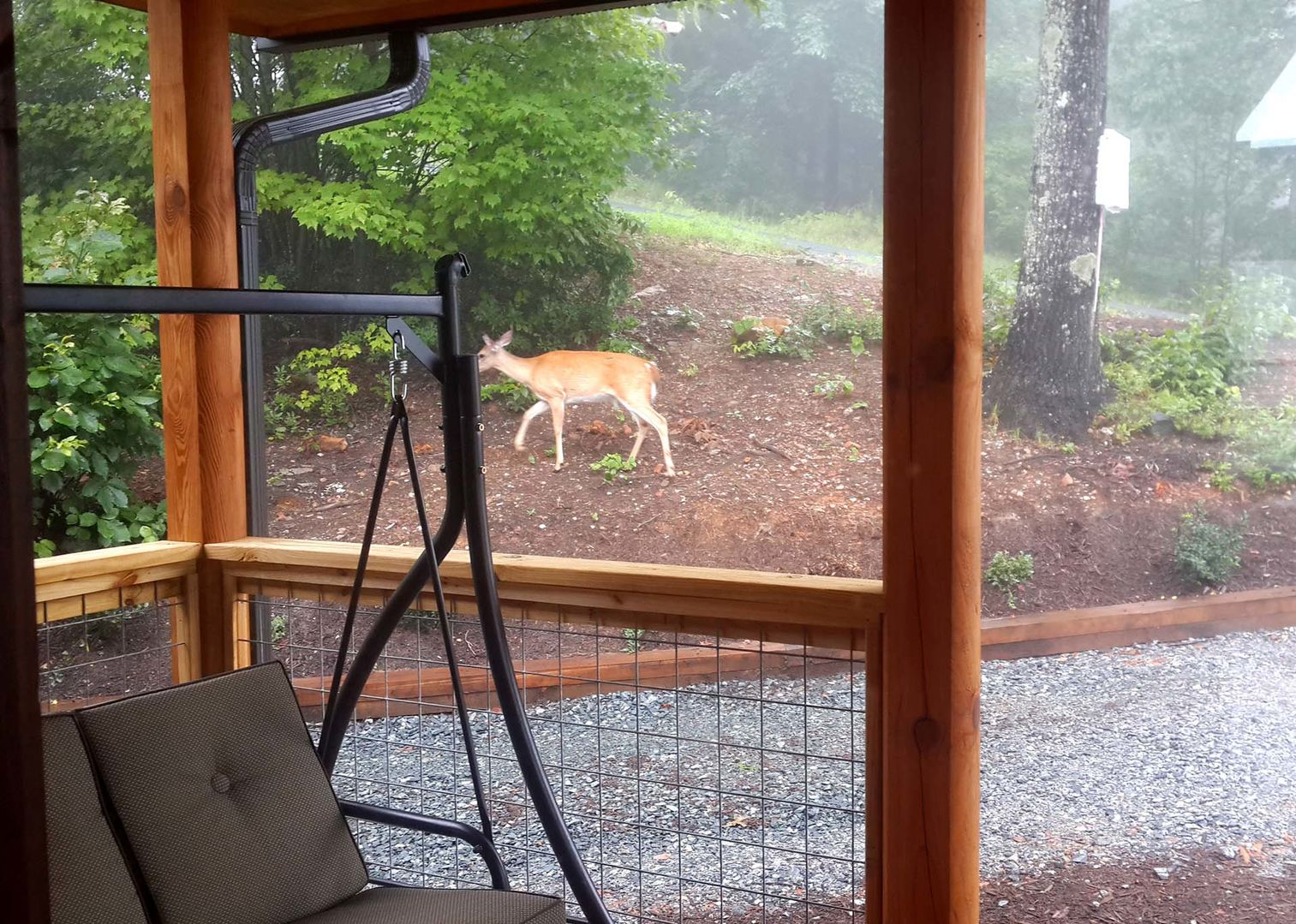 If you're lucky, you might see some deer roaming around int he yard!
