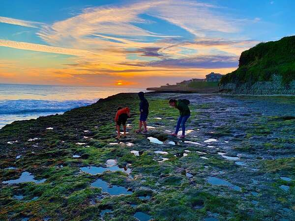 Explore tide pools!