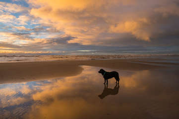 Pet-friendly, take your dog for a long walk on the beach.