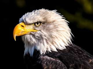 While you're here you might get lucky and see a bald eagle.
