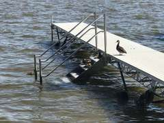 Ducks Love the Easy Access Dock Stairs