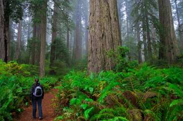 Nearby Armstrong Woods — towering redwoods, picnic facilities, and miles of hiking
