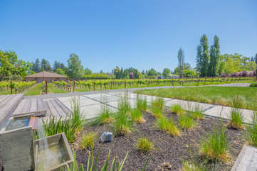 Vineyards of Sauvignon Blanc and Zinfandel grapes out your back door!