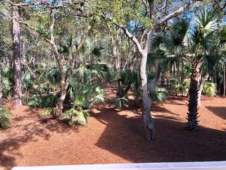 Large private,  wooded lot