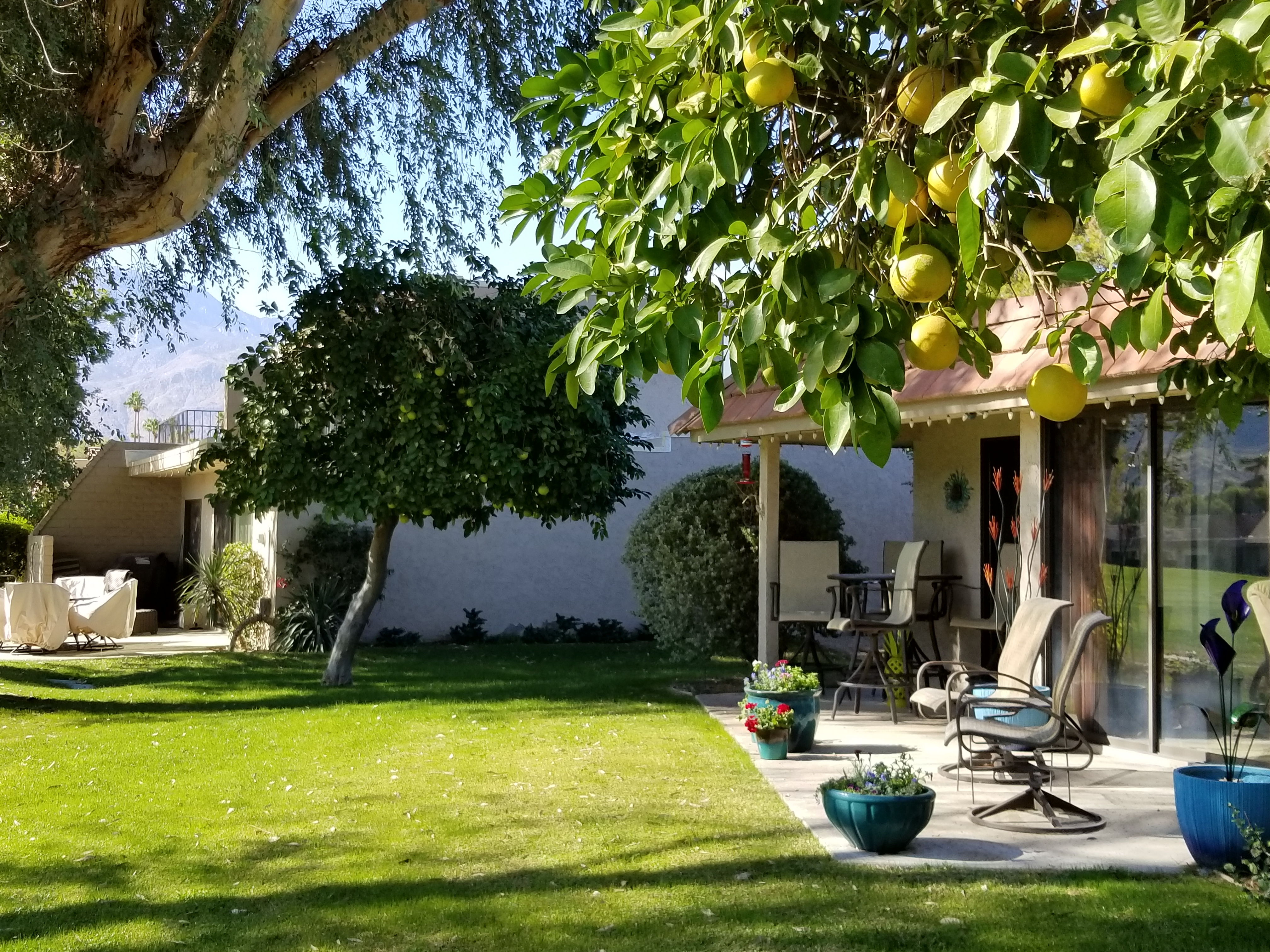Patio and Mature Fruit Trees