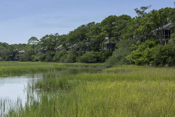 The marsh is amazing. Egrets, herons, fish, crabs and turtles are everywhere!