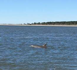 Dolphins are often spotted along the estuary !
