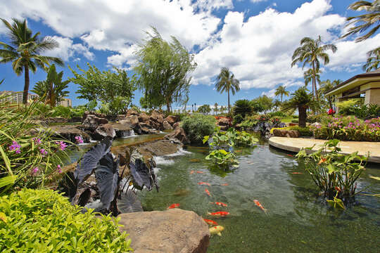 Relax while watching the fish in the Koi Pond