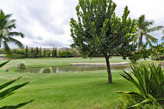 View of a Pond at the Golf Course, Trees and Palm Trees.