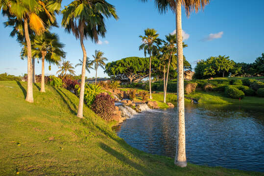 Pond with Artificial Waterfall, and Palm Trees.