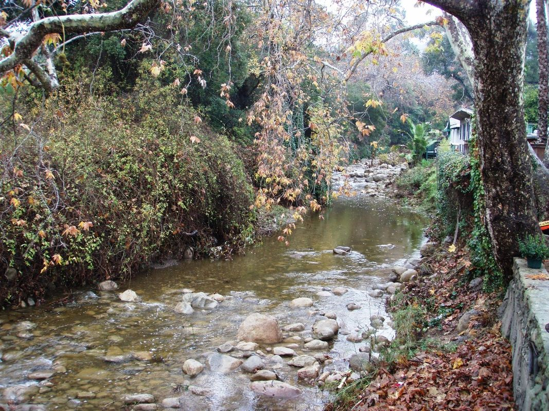 Creek behind property