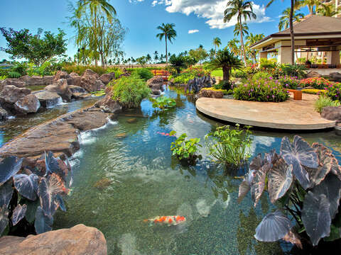 Koi Pond Outside our Beach Rentals in Oahu Hawaii