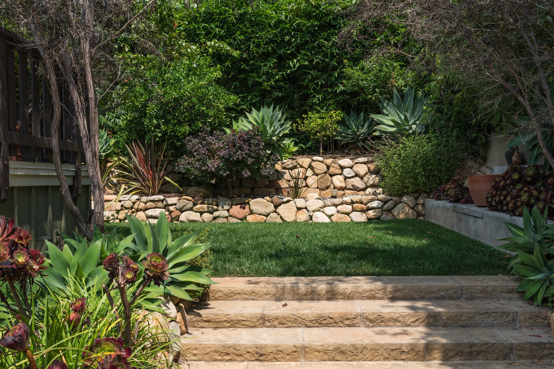 Landscaped backyard with grass and citrus trees