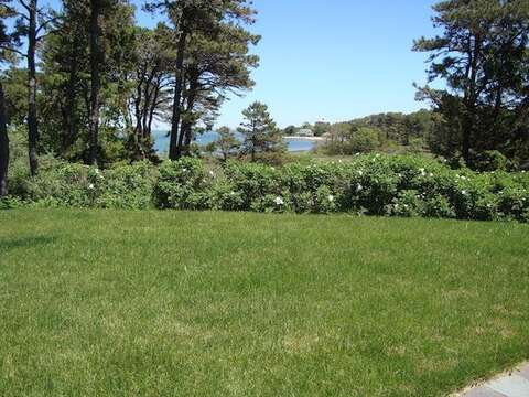 Backyard- perfect for a game of croquet or badminton! - Waterfront North Chatham Cape Cod New England Vacation Rentals