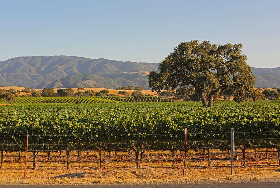 Scenic Santa Barbara Wine Country
