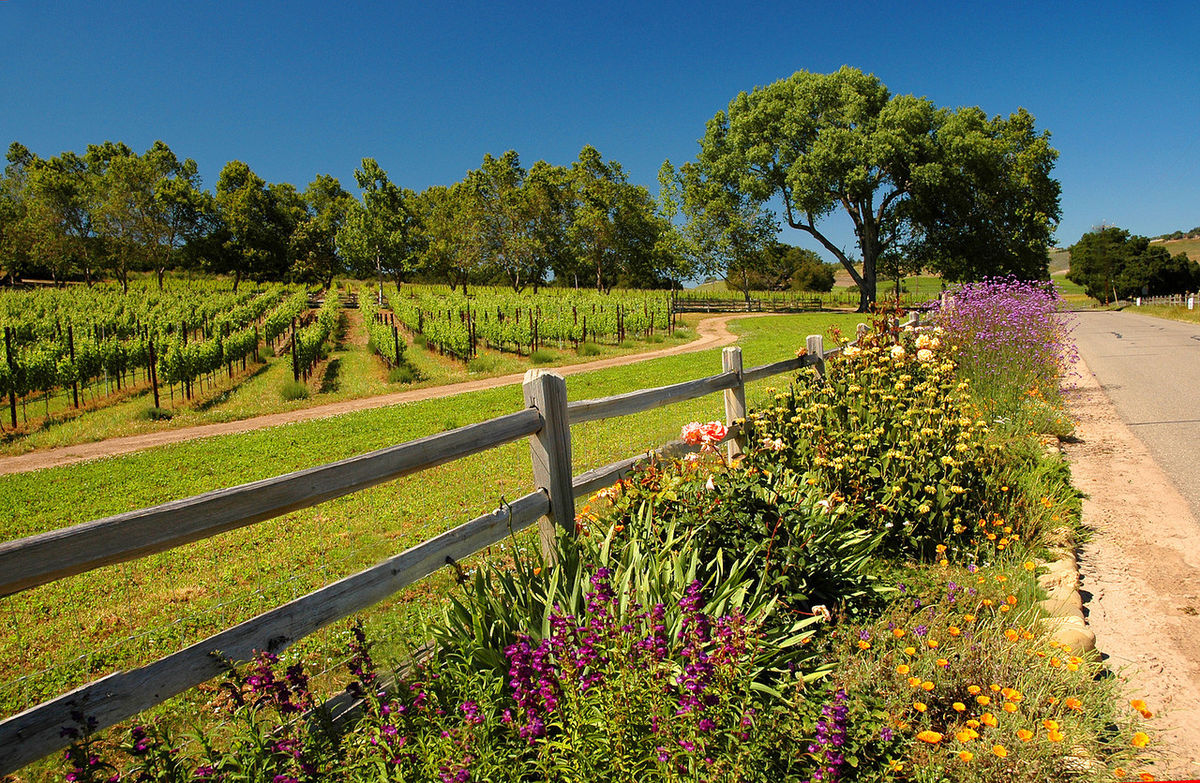 Short Drive to Santa Barbara Wine Country