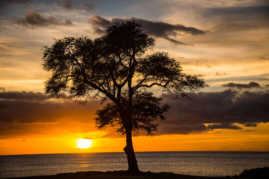 A tree by the beach at dusk.