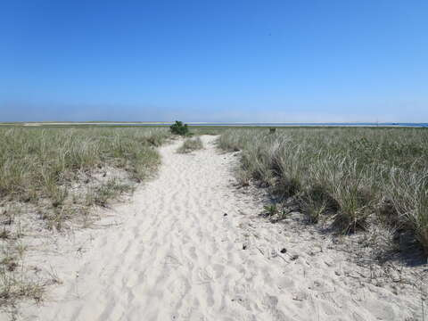 Pathway to Peace.. - 46 Little Beach Road Chatham Cape Cod New England Vacation Rentals