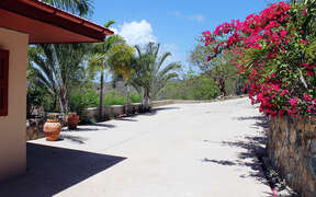 Natural beauty with flower and palm lined driveway