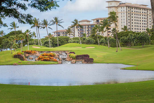 Pond on the Golf Course Surrounded by Palm Trees.