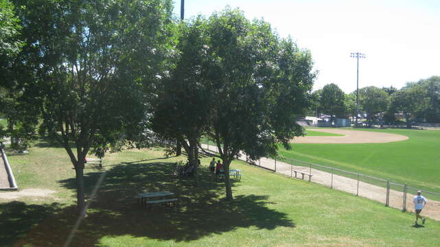 Bike to the ball field to catch a Chatham A's game!- Chatham Cape Cod New England Vacation Rentals