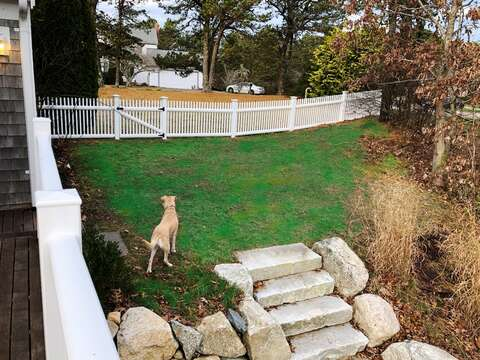 Fido is safe and can have some freedom in the completely fenced yard! 151 Sky Way Chatham Cape Cod New England Vacation Rentals