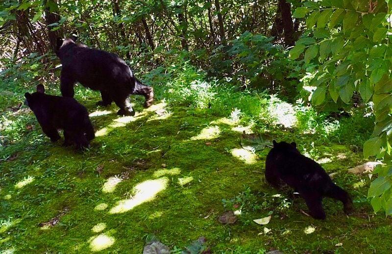 Enjoy Sightings of Bears During Stay.