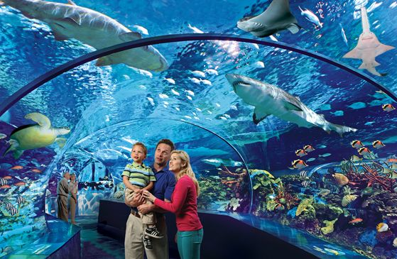 Picture of a Family in the Ripleys Aquarium Gatlinburg.