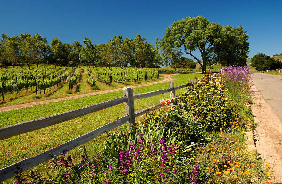 Take a day trip to the wine country