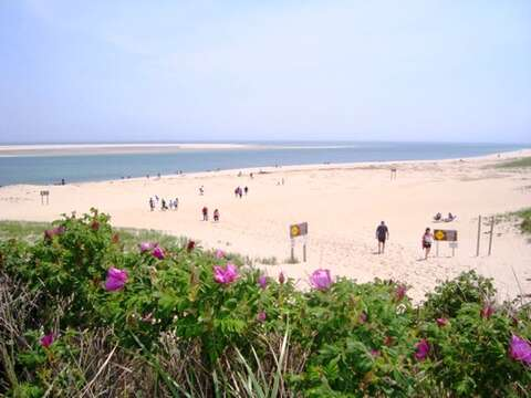 Lighthouse Beach is just a half mile walk! - Chatham Cape Cod - New England Vacation Rentals