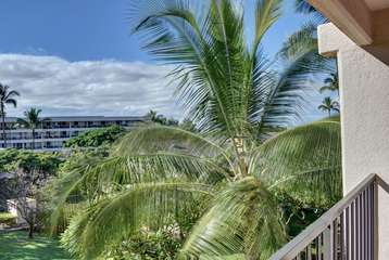 Tropical landscaping and peek a boo ocean view through the palms