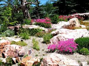 Betty Ford Gardens