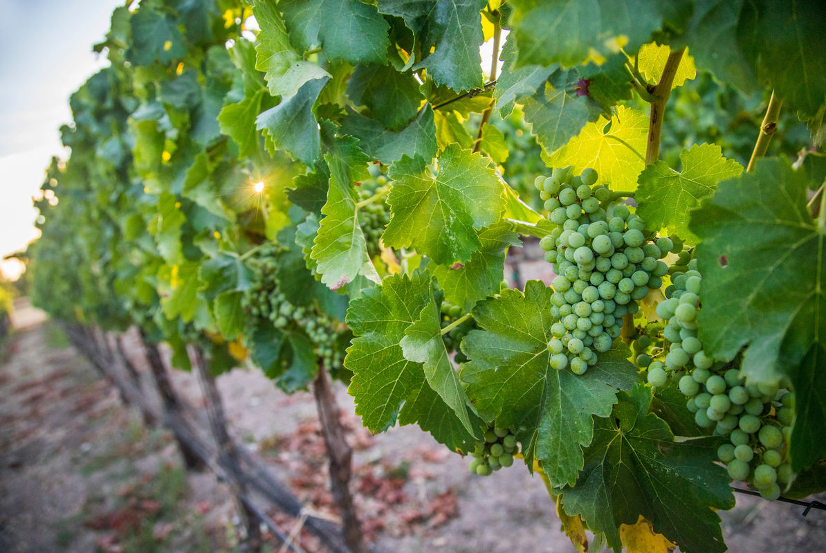 This property is close to all the popular local wineries!