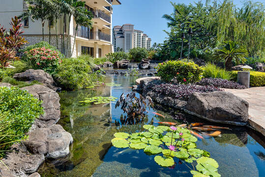 Quiet, Relaxing Koi Pond on Property