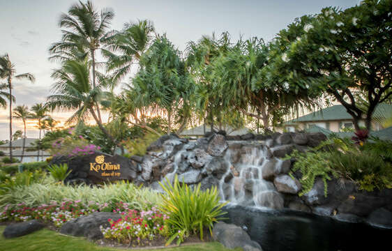 Beautiful Waterfall Feature at Ko Olina Resort