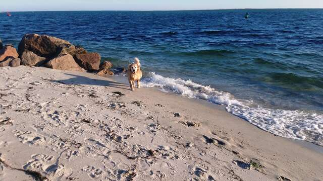 Let your dog take a quick dip to cool off and then head back along the beautiful dunes. - Chatham Cape Cod - New England Vacation Rentals